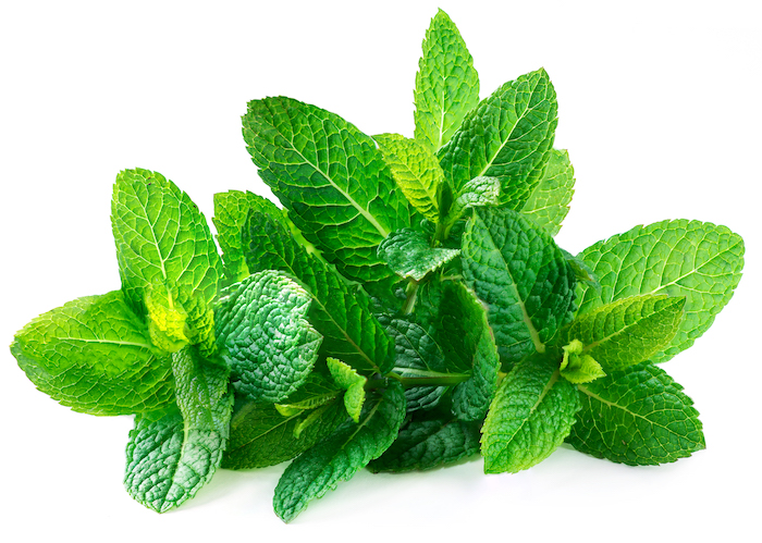 mint- herbs for weight loss